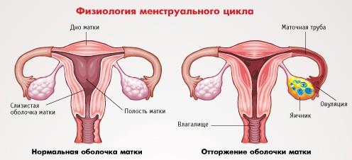 2. Что такое менструальный цикл и менструация